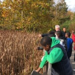 Students standing behind a fence. On the other side of the fence is a field of cattails.